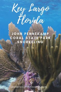 John Pennekamp Coral State Park snorkeling in Key Largo Florida. Explore the best Key Largo coral reefs and enjoy nature in John Pennekamp! Caprock Canyon State Park, Colorado Bend State Park, Michigan State Parks, Snow Canyon State Park, Indiana State, Florida Vacation, Florida Travel, Florida Keys, Fl Keys