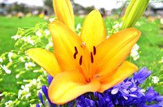 Arreglo Floral a mi padre