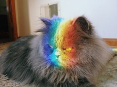 Jody the cat loves to sit in the rainbow colors!