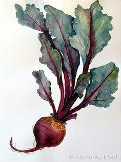 Image result for watercolor beet  still life
