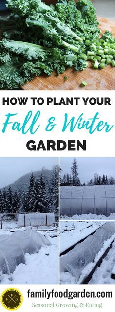 How to plan & plant your fall & winter garden | Family Food Garden