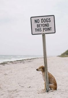 Lol! Just like a dog - gotta test the boundary! Love it!
