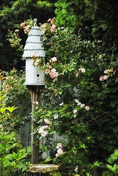 Bird house and Roses Cape Cod MAhttp://judyscottagegarden.blogspot.com/