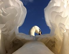 A swan, as you have never seen photographed before by Gerald Robinson, British Wildlife Photography Awards - Animal Portraits Category Photography Competitions, Photography Awards, Wildlife Photography, Animal Photography, Amazing Photography, Portrait Photography, Swans, Beautiful Birds, Animals Beautiful