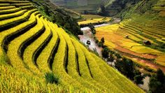 Victoria Sapa Resort & Spa: Beautiful Sapa is known for its steep rice paddies, highland treks and breathtaking views. Lao Chi, Vietnam