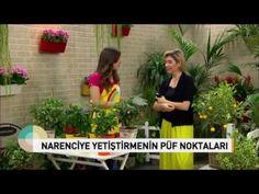 Evde Limon ve Mandalina Yetiştirmenin Püf Noktaları ! How to care Citrus ? - YouTube