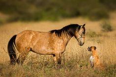 Photo by SylwiaUrbaniak Horses, Photography, Animals, Instagram, Fotografie, Animales, Photograph, Animaux, Photo Shoot