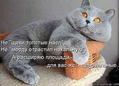 День кошек круглый год - большая подборка забавных котоматриц.