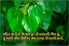 Gujarati quote Poem Quotes, Best Quotes, Qoutes, Poems, Gujarati Shayri, Gujarati Quotes, Plant Leaves, Lyrics, Thoughts
