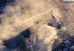 HAZY HORSE Equine photography by Ekaterina Druz