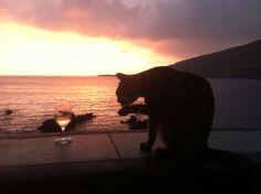 SUNSET IN JUNE Kealakekua Bay, Bali House, Hawaii, Elephant, June, Animals, Animales, Animaux, Animal
