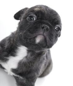 Baby Bugg...may have a new addition to our family soon :)