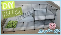 Try to make sure that your gorgeous guinea pigs have the best things in life. A sizeable guinea pig cage, or run, not only helps make them more fun to view, but makes sure they get the physical exercise they require to keep healthy. Diy Guinea Pig Cage, Guinea Pig Hutch, Guinea Pig House, Pet Guinea Pigs, Guinea Pig Care, Chinchillas, Hamsters, Gerbil, Rodents
