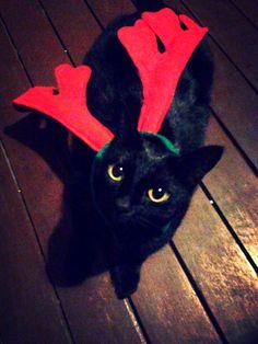 Happy Catmas Cats, Happy, Animals, Gatos, Animais, Animales, Animaux, Animal, Happiness