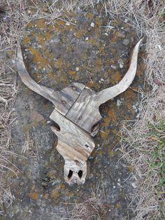Rustic Cow Skull Pallet Wood Wall Art by MakeupAndMudCrafts Wooden Pallet Projects, Wooden Pallet Furniture, Wooden Wall Decor, Woodworking Projects Diy, Wood Pallets, Small Wood Projects, Pallet Wood, Pinterest Home Decor Ideas, Car Part Furniture