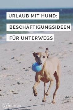 Road Trip mit Hund: Geniale Beschäftigungsideen für unterwegs
