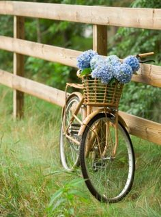 Bicycle with basket and flowers (hydrangeas)