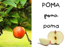 POMA.png (1600×1109)