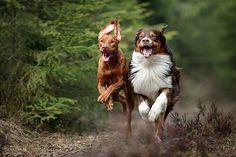 """Две маленькие лошадки"" by Надежда Иванова (http://35photo.ru/photo_1848423/#cat0/1848423)"