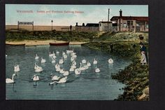 Weymouth - Swans and Portland Station - colour printed postcard