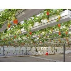 strawberry gutter arbor?   PVC 110 GUTTER SYSTEM