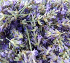 Lavender: The taste is even better than the scent. Lavender Garden, Lavender Blue, Lavender Fields, Lavender Flowers, Lilac, Purple, Lavenders Blue Dilly Dilly, Growing Lavender, Malva