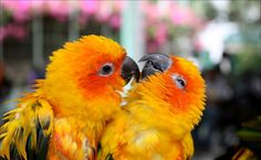 Cute Love Wallpapers | Cute love birds wallpapers | Good Morning Quote