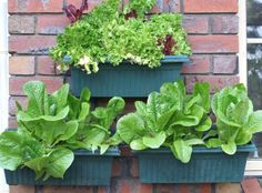 Hang planter boxes and plant pots with the Brick Wall Picture Hook Hanger - The Hook Depot Picture Hangers, Picture Wall, Planter Boxes, Planters, Potted Plants, Plant Pots, Backyard Patio, Garden Planning, Brick Wall