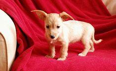 Binghamton Ny Terrier Unknown Type Medium Meet Sruffy A Dog
