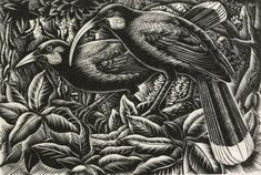 Nga huia, Wellington, by E Mervyn Taylor. Gift of the New Zealand Academy of Fine Arts, Te Papa New Zealand Art, Nz Art, Paris Images, Maori Art, Country Scenes, Black And White Drawing, Bird Drawings, Wood Engraving, Art Techniques