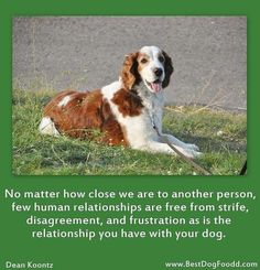 Dogs - a relationship of love and trust!
