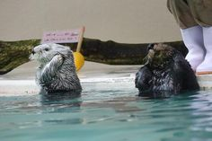 Daily Otter (@TheDailyOtter)   Twitter