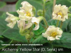 Alchemy Yellow Star