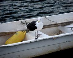Nautical Decor, Rockport, Seagull Photography, Seagull Print, Bird Photography,Bird Print,Boat Photography,Boat Print,seagull walla rt by WayneOxfordPrints on Etsy https://www.etsy.com/listing/179657872/nautical-decor-rockport-seagull