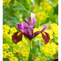 Deeply glamorous, in my favourite copper-brown, with lovely veins of gold and purple.