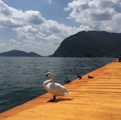 The Floating Piers - Christo, Lake Iseo 2016