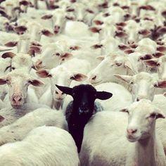 Me! Always the black sheep...