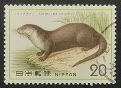 Japanese River Otter, Japan