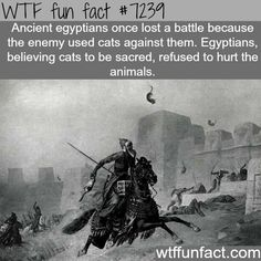 WTF Fun Facts is updated daily with interesting & funny random facts. We post about health, celebs/people, places, animals, history information and much more. New facts all day - every day! Wtf Fun Facts, Funny Facts, Random Facts, Funny Memes, Interesting Information, Interesting History, Interesting Facts, History Memes, History Facts