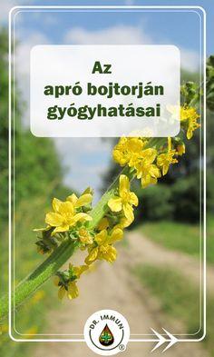 Herbs, Health, Plants, Amigurumi, Health Care, Herb, Plant, Planets, Salud