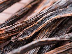 Providence Perfume Co. Provanilla: Jack Sparrow's Caribbean Vanilla