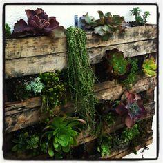 Bonito y económico jardín vertical con plantas crasas