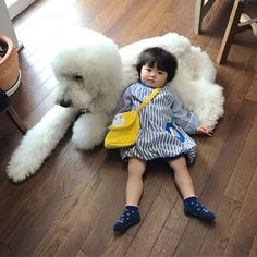 Mame is an adorable two-year-old that has found a friend in Riku, a giant poodle. Giant Poodle, French Poodles, Standard Poodles, Super Cat, Purebred Dogs, Dogs And Kids, Dog Runs, Cat Names, Cat Design