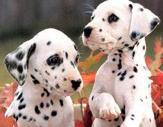 nombres para perras bonitos