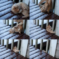 Falling Cat...oh oh bye bye Ralph off the deck...