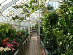 Tollcross Park - inside the Winter Gardens - geograph.org.uk - 946233 - Conservatory (greenhouse) - Wikipedia