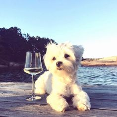 Just chilling out on the beach with a glass of wine.