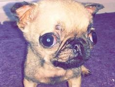Tiny Puppy's Tragic Death Is Proof That Puppy Mills Are Dangerous