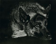 "Shepherd Pause by Heather A. Mitchell Scratchboard ~ 11"" x 14"""