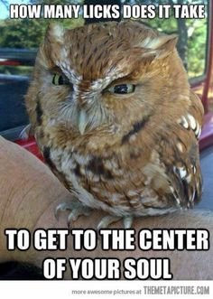 """Cute Owl ~ """"How many licks does it take to get to the center of your soul?"""""""